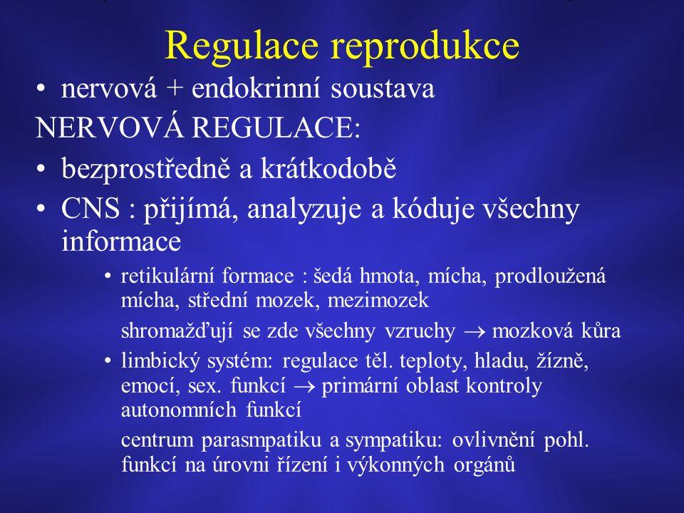 Regulace reprodukce nervová + endokrinní soustava NERVOVÁ REGULACE: bezprostředně a krátkodobě CNS : přijímá, analyzuje a kóduje všechny informace retikulární formace : šedá hmota, mícha, prodloužená mícha, střední mozek, mezimozek shromažďují se zde všechny vzruchy  mozková kůra limbický systém: regulace těl.