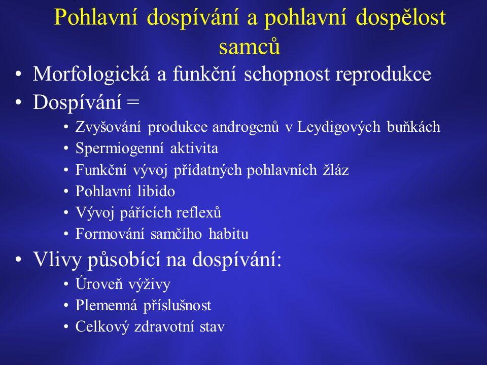 Pohlavní dospívání a pohlavní dospělost samců Morfologická a funkční schopnost reprodukce Dospívání = Zvyšování produkce androgenů v Leydigových buňkách Spermiogenní aktivita Funkční vývoj přídatných pohlavních žláz Pohlavní libido Vývoj pářících reflexů Formování samčího habitu Vlivy působící na dospívání: Úroveň výživy Plemenná příslušnost Celkový zdravotní stav