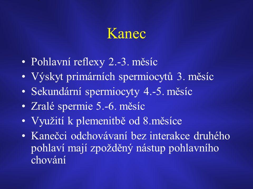 Kanec Pohlavní reflexy 2.-3. měsíc Výskyt primárních spermiocytů 3.