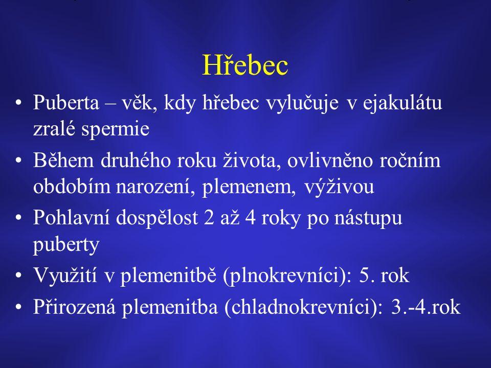 Hřebec Puberta – věk, kdy hřebec vylučuje v ejakulátu zralé spermie Během druhého roku života, ovlivněno ročním obdobím narození, plemenem, výživou Pohlavní dospělost 2 až 4 roky po nástupu puberty Využití v plemenitbě (plnokrevníci): 5.