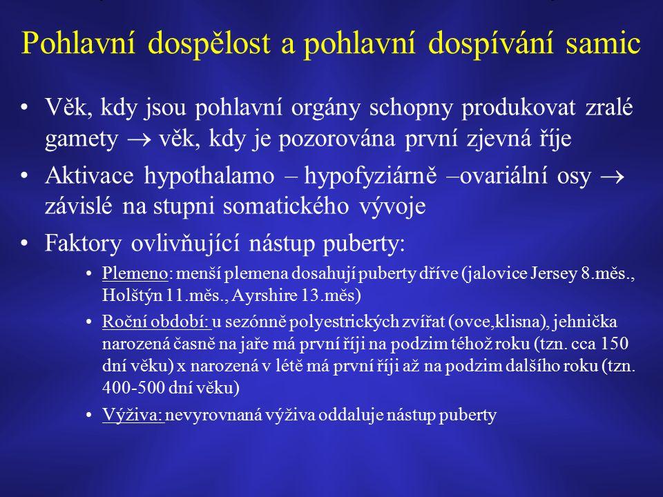 Pohlavní dospělost a pohlavní dospívání samic Věk, kdy jsou pohlavní orgány schopny produkovat zralé gamety  věk, kdy je pozorována první zjevná říje Aktivace hypothalamo – hypofyziárně –ovariální osy  závislé na stupni somatického vývoje Faktory ovlivňující nástup puberty: Plemeno: menší plemena dosahují puberty dříve (jalovice Jersey 8.měs., Holštýn 11.měs., Ayrshire 13.měs) Roční období: u sezónně polyestrických zvířat (ovce,klisna), jehnička narozená časně na jaře má první říji na podzim téhož roku (tzn.