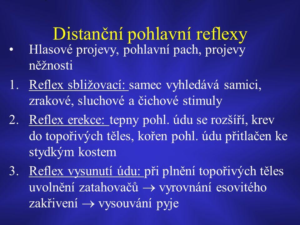 Distanční pohlavní reflexy Hlasové projevy, pohlavní pach, projevy něžnosti 1.Reflex sbližovací: samec vyhledává samici, zrakové, sluchové a čichové stimuly 2.Reflex erekce: tepny pohl.