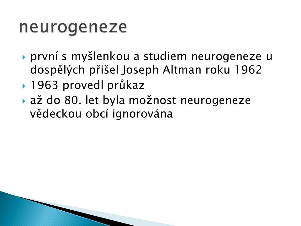  první s myšlenkou a studiem neurogeneze u dospělých přišel Joseph Altman roku 1962  1963 provedl průkaz  až do 80.