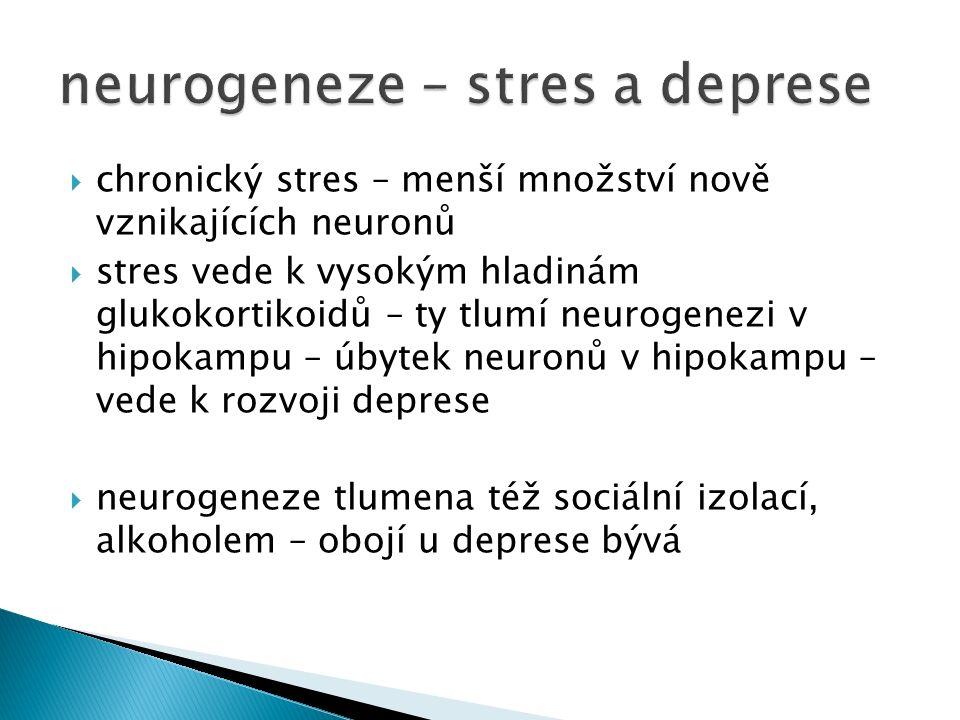  chronický stres – menší množství nově vznikajících neuronů  stres vede k vysokým hladinám glukokortikoidů – ty tlumí neurogenezi v hipokampu – úbytek neuronů v hipokampu – vede k rozvoji deprese  neurogeneze tlumena též sociální izolací, alkoholem – obojí u deprese bývá