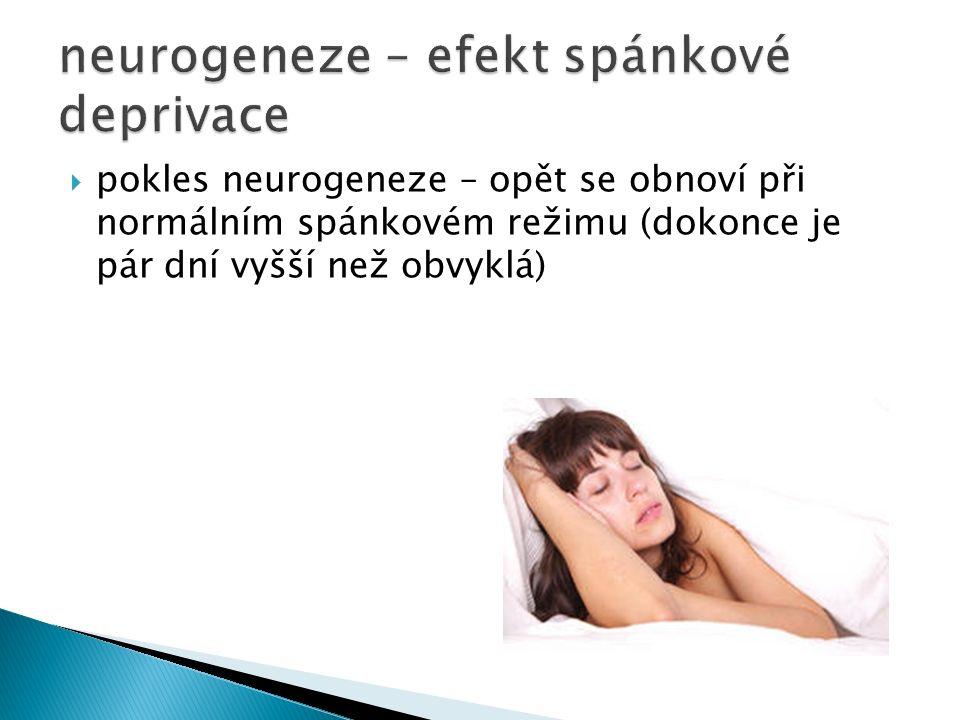  pokles neurogeneze – opět se obnoví při normálním spánkovém režimu (dokonce je pár dní vyšší než obvyklá)