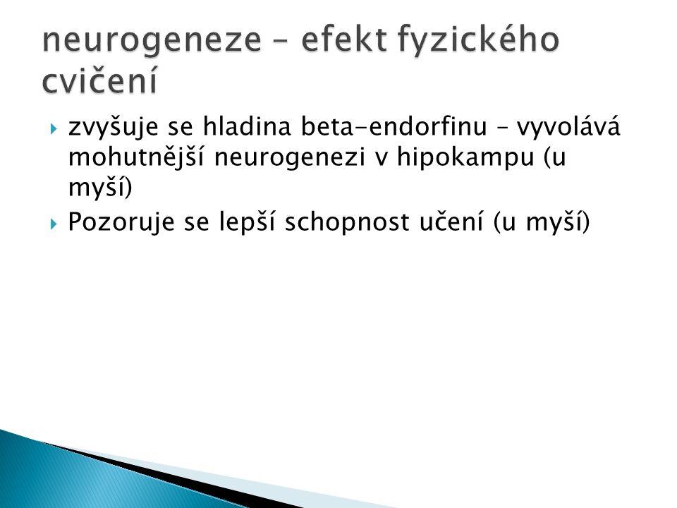  zvyšuje se hladina beta-endorfinu – vyvolává mohutnější neurogenezi v hipokampu (u myší)  Pozoruje se lepší schopnost učení (u myší)