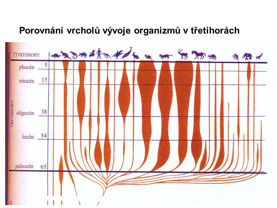 Porovnání vrcholů vývoje organizmů v třetihorách