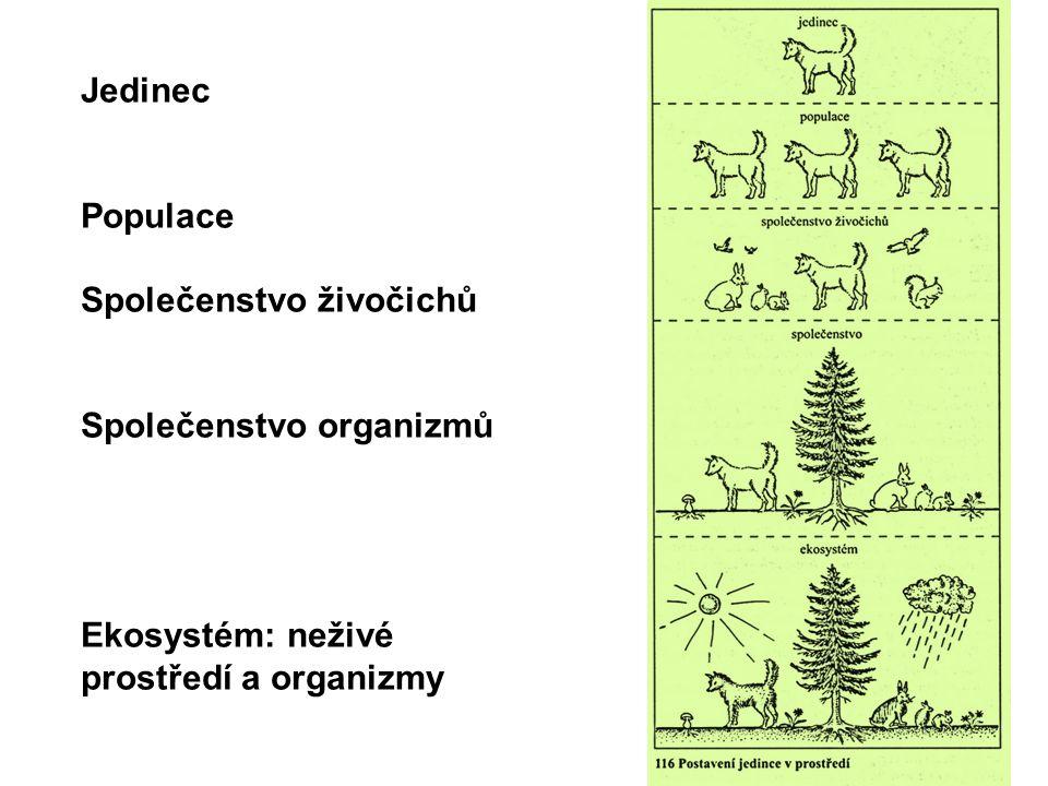 Jedinec Populace Společenstvo živočichů Společenstvo organizmů Ekosystém: neživé prostředí a organizmy