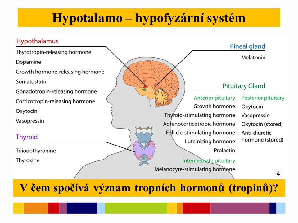 Hypotalamo – hypofyzární systém [6] [4] V čem spočívá význam tropních hormonů (tropinů)?