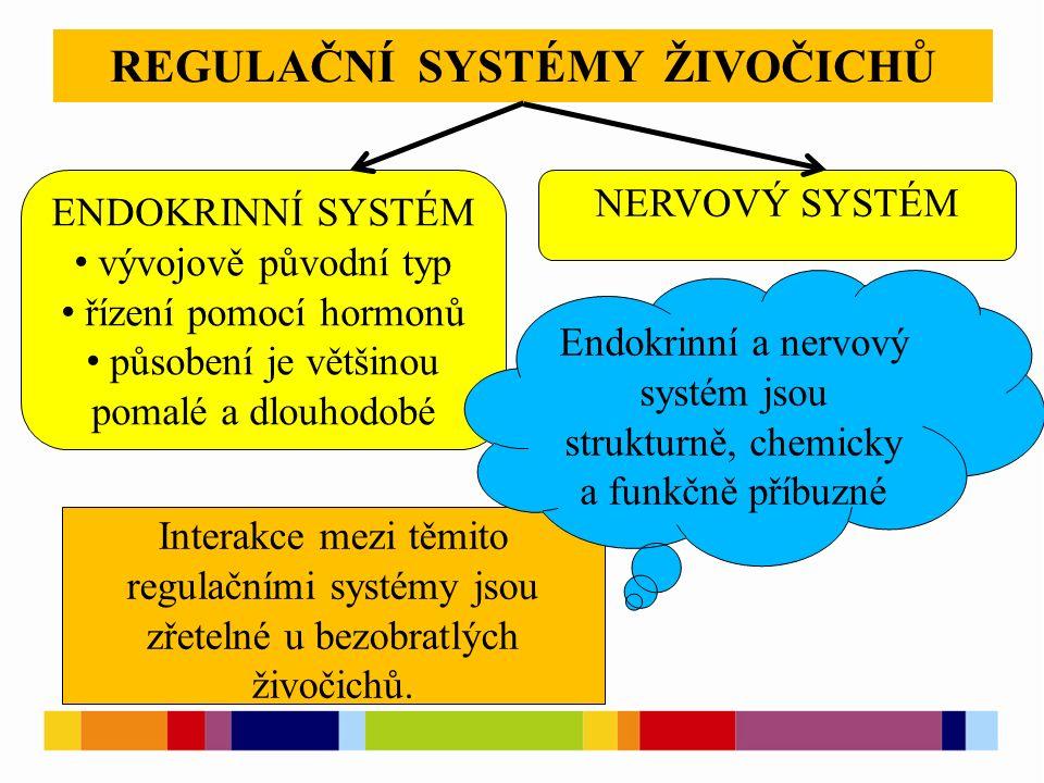 REGULAČNÍ SYSTÉMY ŽIVOČICHŮ ENDOKRINNÍ SYSTÉM vývojově původní typ řízení pomocí hormonů působení je většinou pomalé a dlouhodobé NERVOVÝ SYSTÉM Interakce mezi těmito regulačními systémy jsou zřetelné u bezobratlých živočichů.