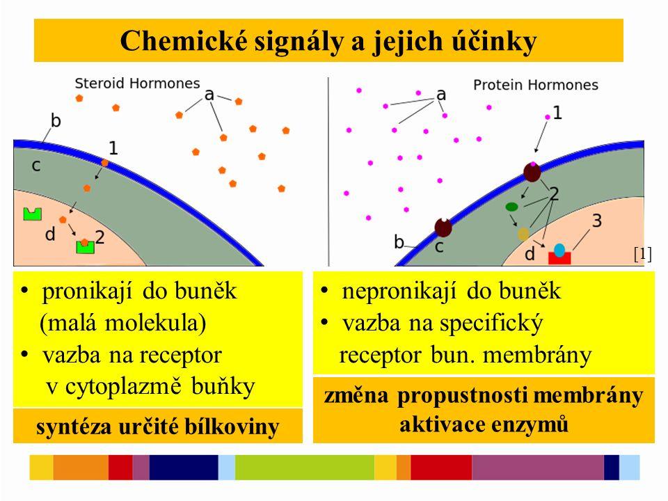 Chemické signály a jejich účinky nepronikají do buněk vazba na specifický receptor bun.