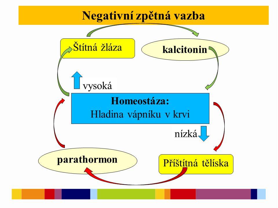 Negativní zpětná vazba Homeostáza: Hladina vápníku v krvi vysoká nízká kalcitonin parathormon Štítná žláza Příštítná tělíska