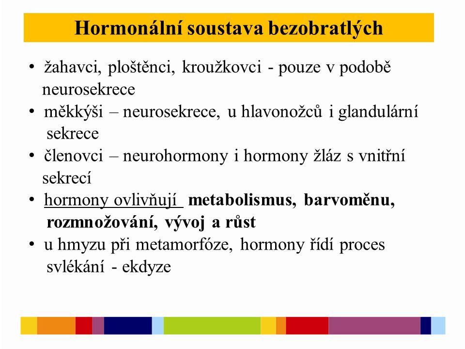 Hormonální soustava bezobratlých žahavci, ploštěnci, kroužkovci - pouze v podobě neurosekrece měkkýši – neurosekrece, u hlavonožců i glandulární sekrece členovci – neurohormony i hormony žláz s vnitřní sekrecí hormony ovlivňují metabolismus, barvoměnu, rozmnožování, vývoj a růst u hmyzu při metamorfóze, hormony řídí proces svlékání - ekdyze
