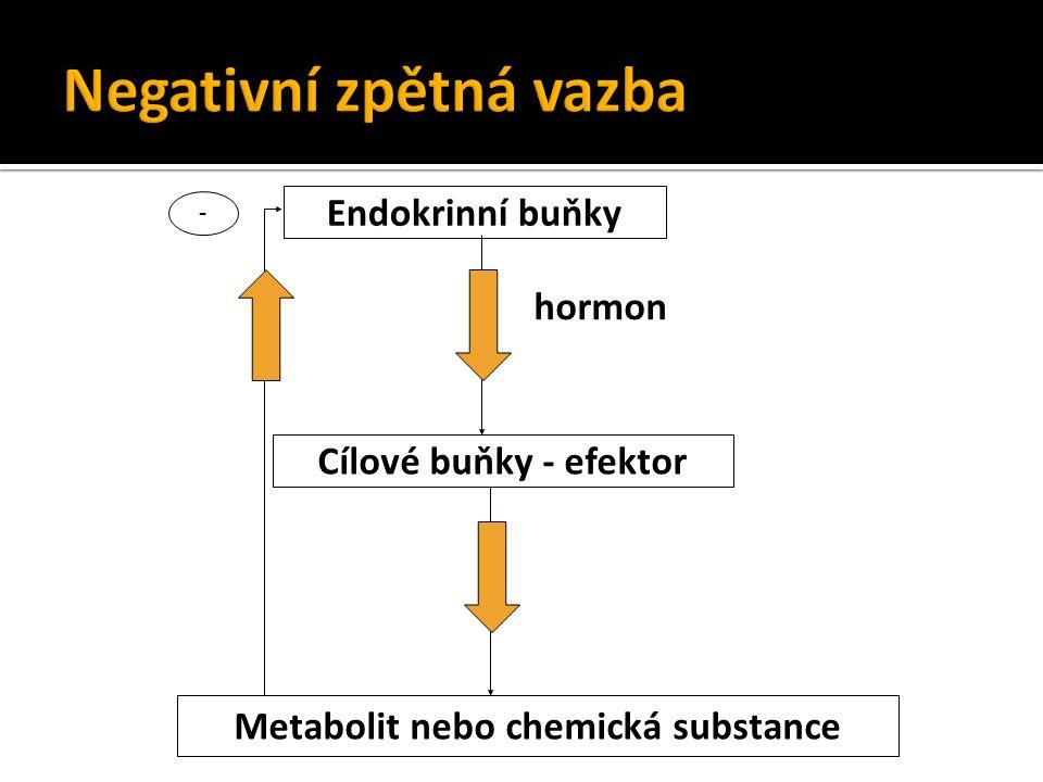 Endokrinní buňky Cílové buňky - efektor Metabolit nebo chemická substance - hormon