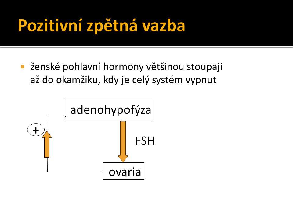  ženské pohlavní hormony většinou stoupají až do okamžiku, kdy je celý systém vypnut adenohypofýza FSH ovaria +