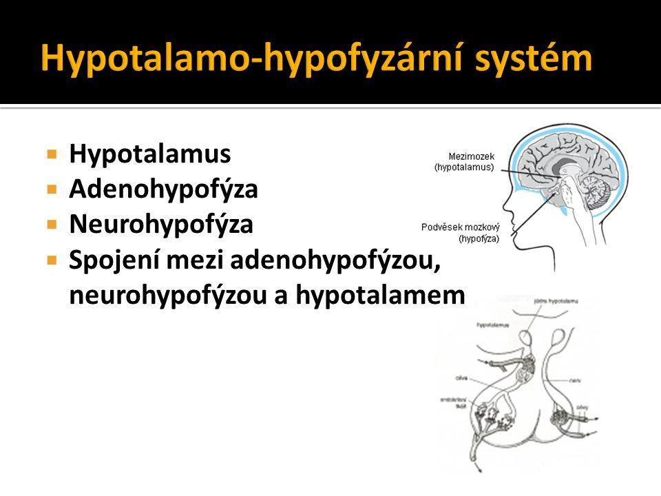  Hypotalamus  Adenohypofýza  Neurohypofýza  Spojení mezi adenohypofýzou, neurohypofýzou a hypotalamem