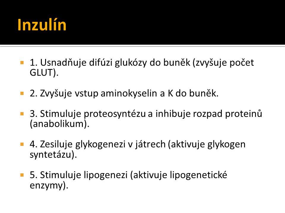  1. Usnadňuje difúzi glukózy do buněk (zvyšuje počet GLUT).  2. Zvyšuje vstup aminokyselin a K do buněk.  3. Stimuluje proteosyntézu a inhibuje roz