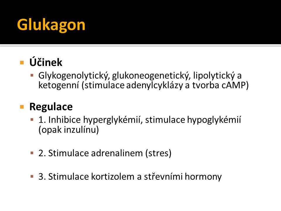  Účinek  Glykogenolytický, glukoneogenetický, lipolytický a ketogenní (stimulace adenylcyklázy a tvorba cAMP)  Regulace  1. Inhibice hyperglykémií