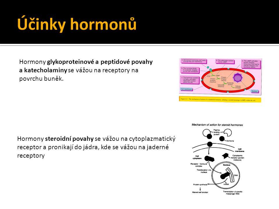 Hormony steroidní povahy se vážou na cytoplazmatický receptor a pronikají do jádra, kde se vážou na jaderné receptory Hormony glykoproteinové a peptidové povahy a katecholaminy se vážou na receptory na povrchu buněk.
