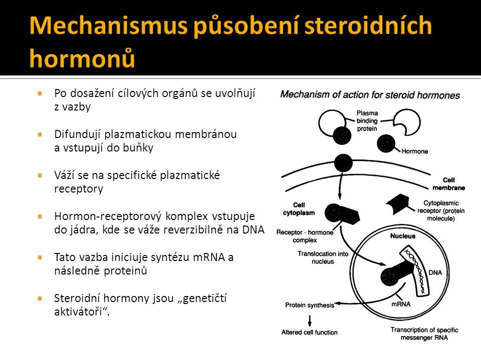 """ Po dosažení cílových orgánů se uvolňují z vazby  Difundují plazmatickou membránou a vstupují do buňky  Váží se na specifické plazmatické receptory  Hormon-receptorový komplex vstupuje do jádra, kde se váže reverzibilně na DNA  Tato vazba iniciuje syntézu mRNA a následně proteinů  Steroidní hormony jsou """"genetičtí aktivátoři ."""