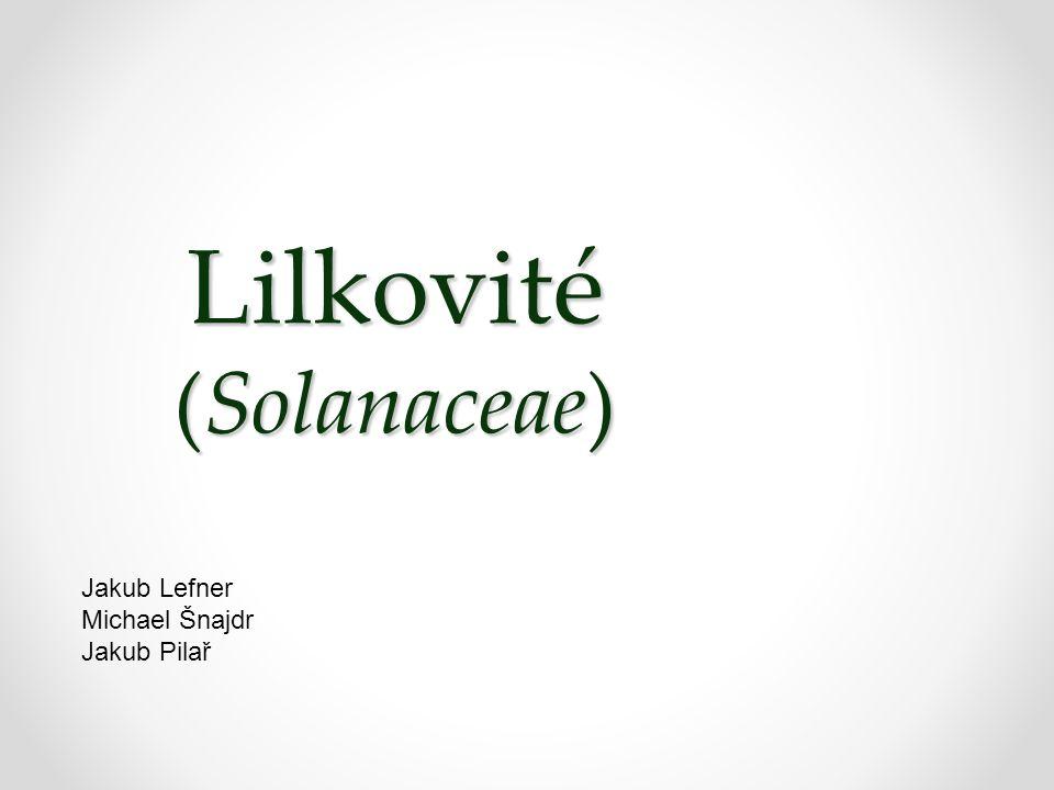 Lilkovité (Solanaceae) Jakub Lefner Michael Šnajdr Jakub Pilař