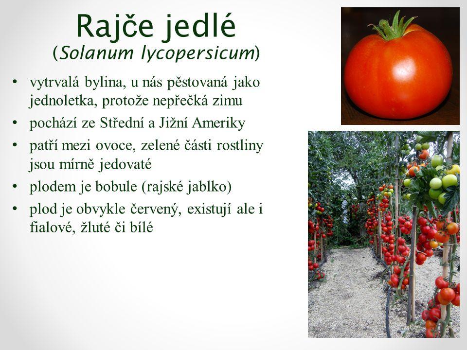 Raj č e jedlé (Solanum lycopersicum) vytrvalá bylina, u nás pěstovaná jako jednoletka, protože nepřečká zimu pochází ze Střední a Jižní Ameriky patří mezi ovoce, zelené části rostliny jsou mírně jedovaté plodem je bobule (rajské jablko) plod je obvykle červený, existují ale i fialové, žluté či bílé