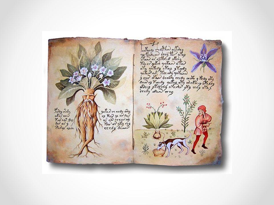  http://cs.wikipedia.org/wiki/Lilkovit%C3%A9 http://cs.wikipedia.org/wiki/Lilkovit%C3%A9  http://www.kvetenacr.cz/celed.asp?IDceled=13 http://www.kvetenacr.cz/celed.asp?IDceled=13  http://dum.rvp.cz/materialy/krytosemenne- rostliny-lilkovite.html http://dum.rvp.cz/materialy/krytosemenne- rostliny-lilkovite.html  http://www.2zskolin.cz/kytky/08/08.html http://www.2zskolin.cz/kytky/08/08.html  u č ebnice Biologie rostlin Zdroje: