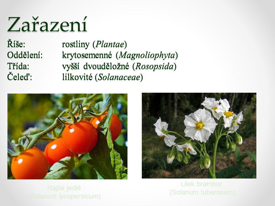 Zařazení Říše:rostliny (Plantae) Oddělení:krytosemenné (Magnoliophyta) Třída:vyšší dvouděložné (Rosopsida) Čeleď:lilkovité (Solanaceae) Rajče jedlé (Solanum lycopersicum) Lilek brambor (Solanum tuberosum) Říše:rostliny (Plantae) Oddělení:krytosemenné (Magnoliophyta) Třída:vyšší dvouděložné (Rosopsida) Čeleď:lilkovité (Solanaceae)