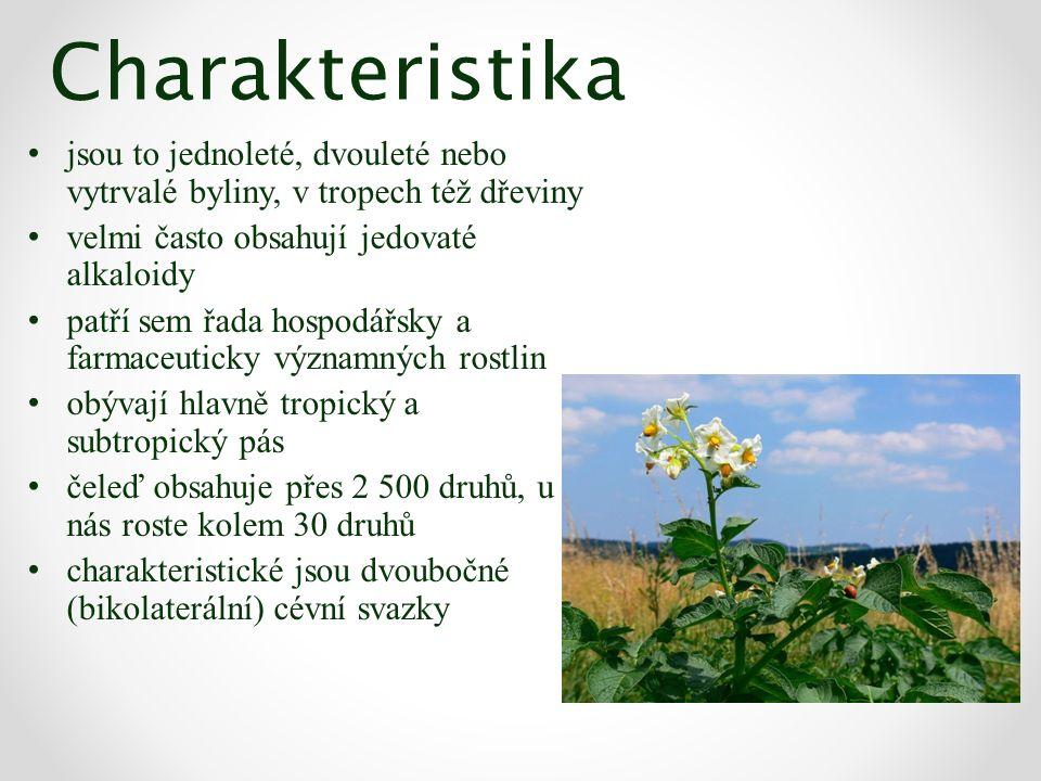 Charakteristika jsou to jednoleté, dvouleté nebo vytrvalé byliny, v tropech též dřeviny velmi často obsahují jedovaté alkaloidy patří sem řada hospodá
