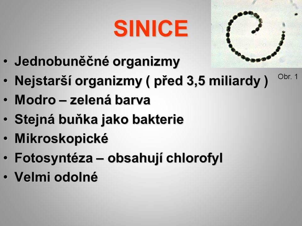 STAVBA TĚLA SINICE Obr. 4