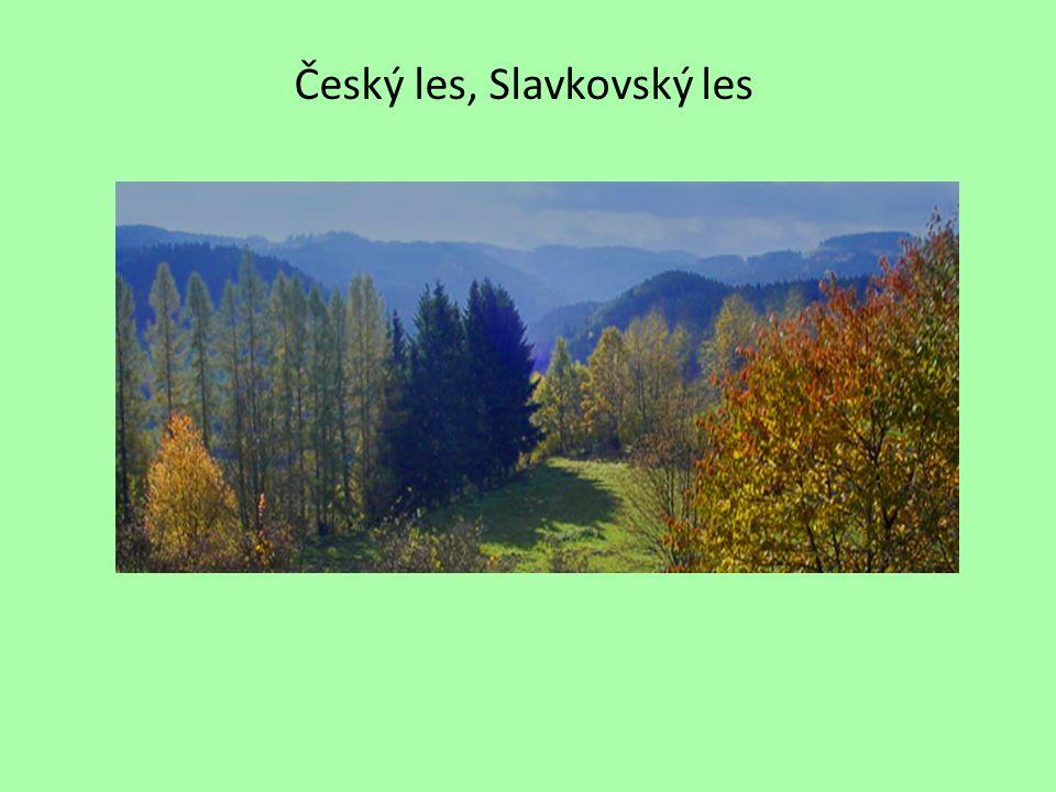 Český les, Slavkovský les