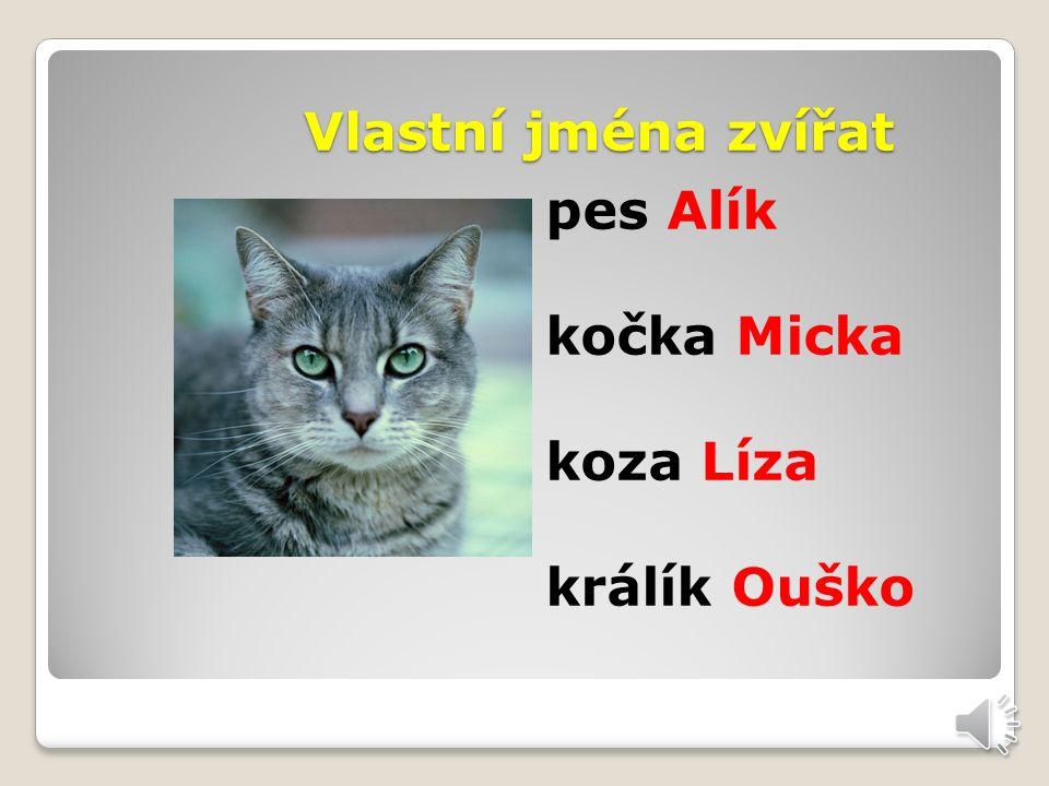 Vlastní jména osob Petr Alena Jan Klára Novák Dvořák