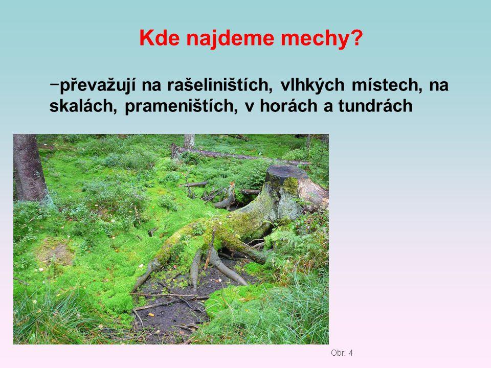 Kde najdeme mechy? −převažují na rašeliništích, vlhkých místech, na skalách, prameništích, v horách a tundrách Obr. 4