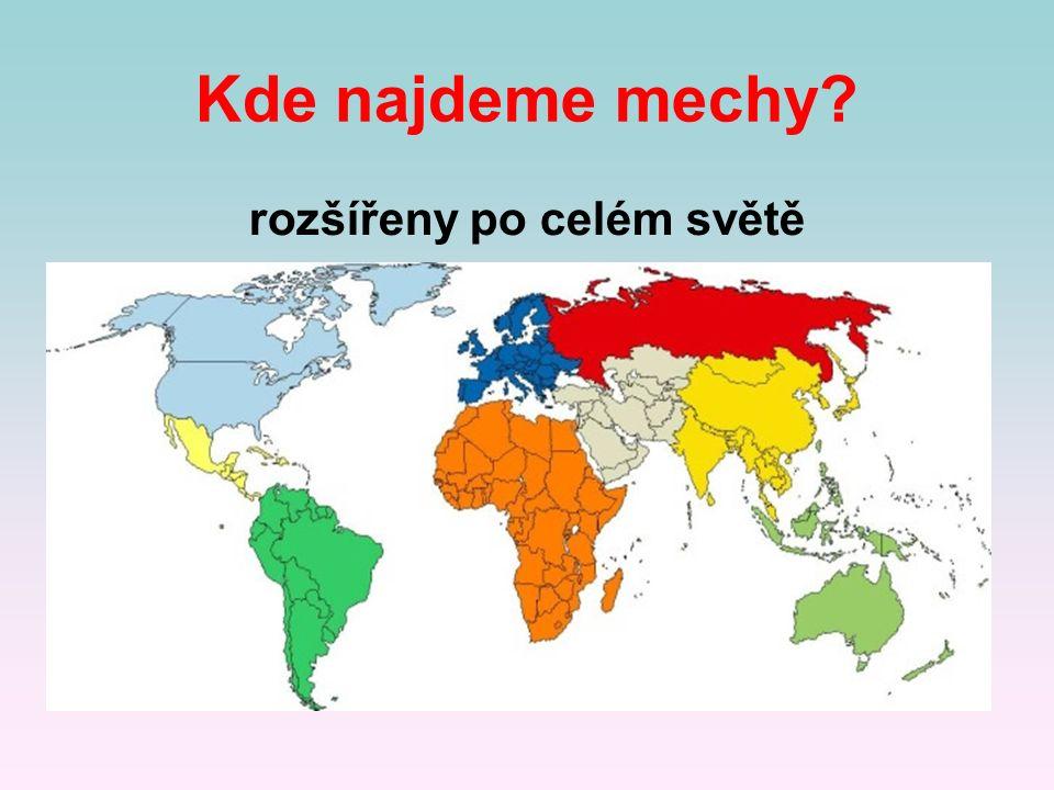 Kde najdeme mechy? rozšířeny po celém světě