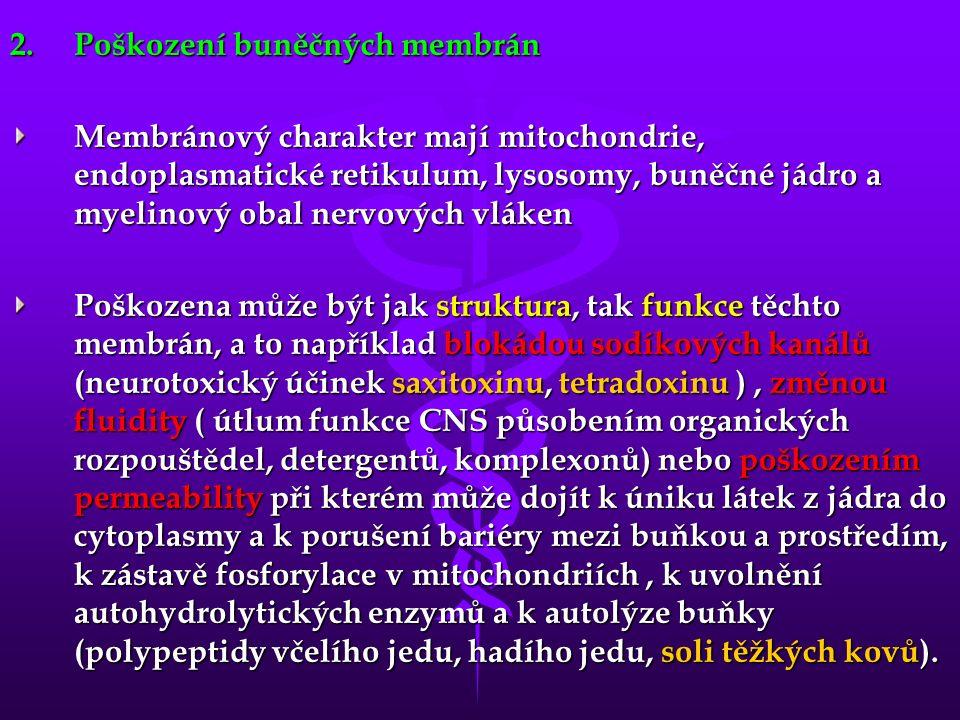 2.Poškození buněčných membrán Membránový charakter mají mitochondrie, endoplasmatické retikulum, lysosomy, buněčné jádro a myelinový obal nervových vláken Poškozena může být jak struktura, tak funkce těchto membrán, a to například blokádou sodíkových kanálů (neurotoxický účinek saxitoxinu, tetradoxinu ), změnou fluidity ( útlum funkce CNS působením organických rozpouštědel, detergentů, komplexonů) nebo poškozením permeability při kterém může dojít k úniku látek z jádra do cytoplasmy a k porušení bariéry mezi buňkou a prostředím, k zástavě fosforylace v mitochondriích, k uvolnění autohydrolytických enzymů a k autolýze buňky (polypeptidy včelího jedu, hadího jedu, soli těžkých kovů).