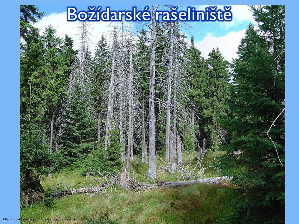 http://cs.wikipedia.org/wiki/Soubor:Bog_spruce_forest.JPG