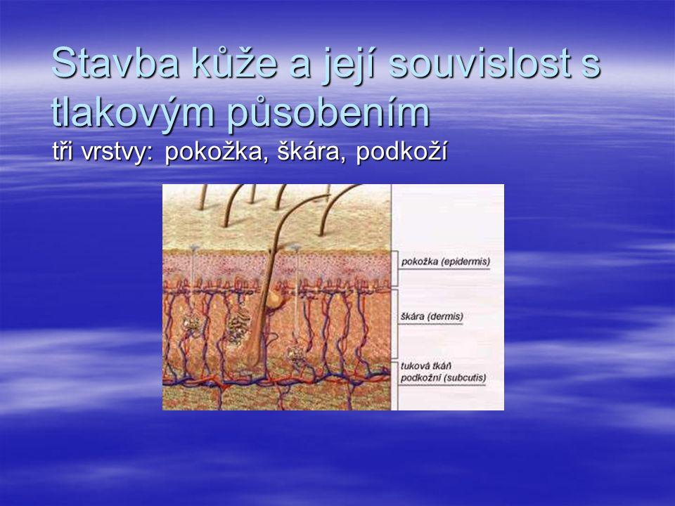 Stavba kůže a její souvislost s tlakovým působením tři vrstvy: pokožka, škára, podkoží