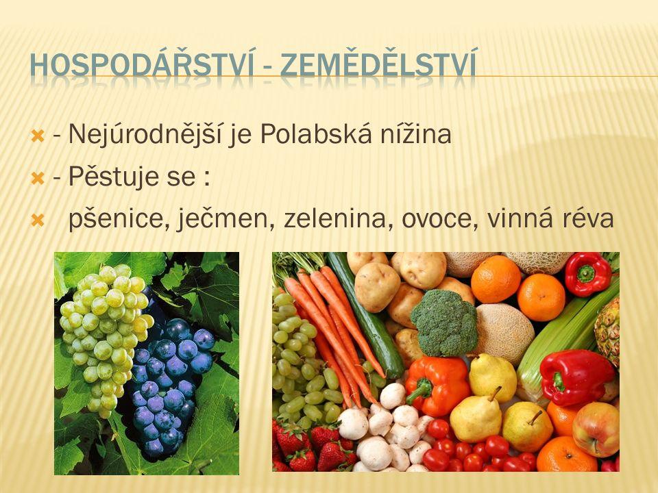  - Nejúrodnější je Polabská nížina  - Pěstuje se :  pšenice, ječmen, zelenina, ovoce, vinná réva