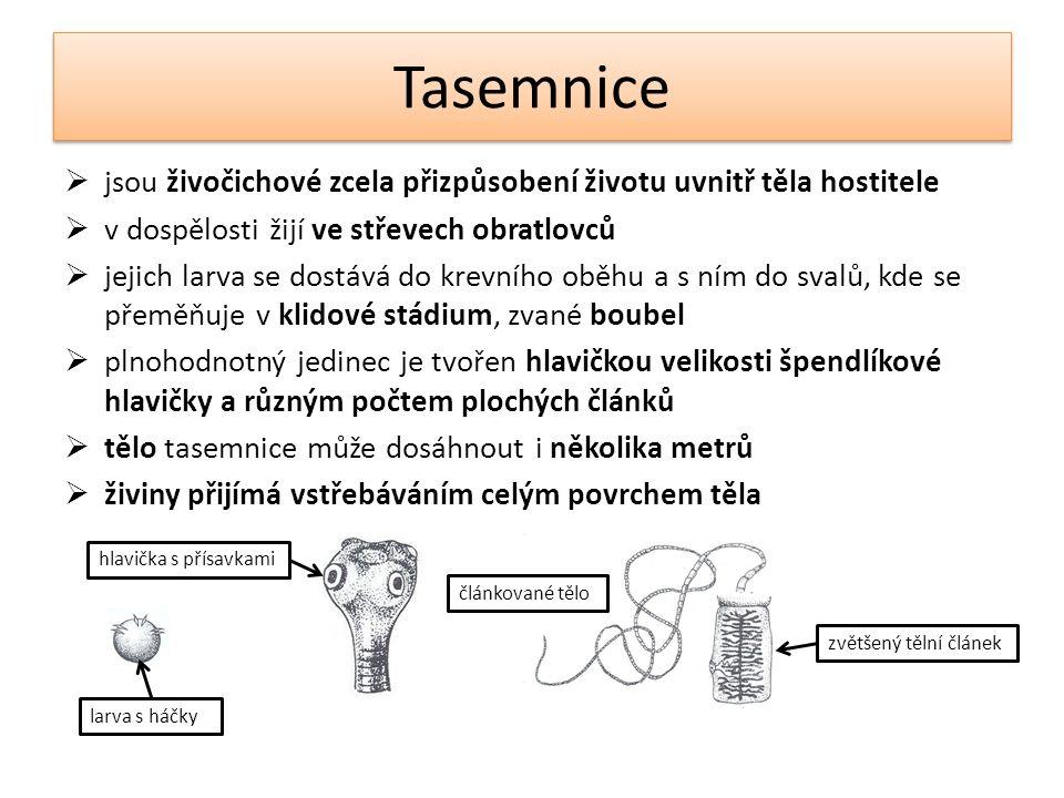 Tasemnice  jsou živočichové zcela přizpůsobení životu uvnitř těla hostitele  v dospělosti žijí ve střevech obratlovců  jejich larva se dostává do k