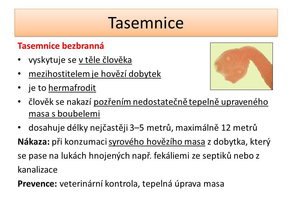 Tasemnice Tasemnice bezbranná vyskytuje se v těle člověka mezihostitelem je hovězí dobytek je to hermafrodit člověk se nakazí pozřením nedostatečně te