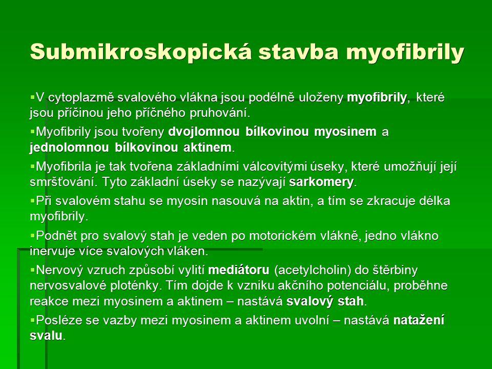 Stavba svalu a myofibrily