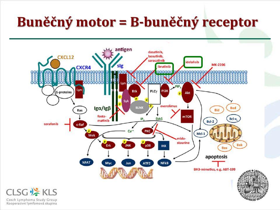 Buněčný motor = B-buněčný receptor