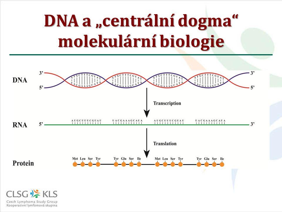 """DNA a """"centrální dogma"""" molekulární biologie"""