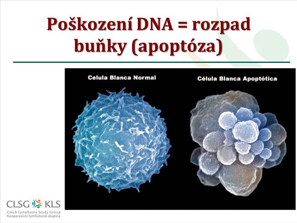 Poškození DNA = rozpad buňky (apoptóza)