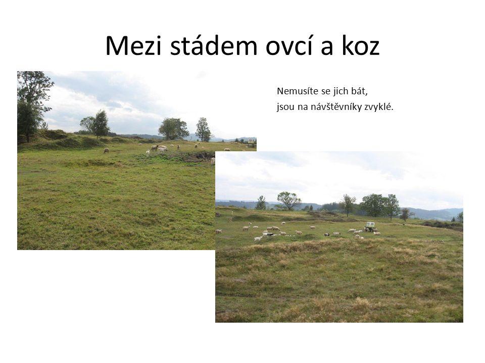 Mezi stádem ovcí a koz Nemusíte se jich bát, jsou na návštěvníky zvyklé.