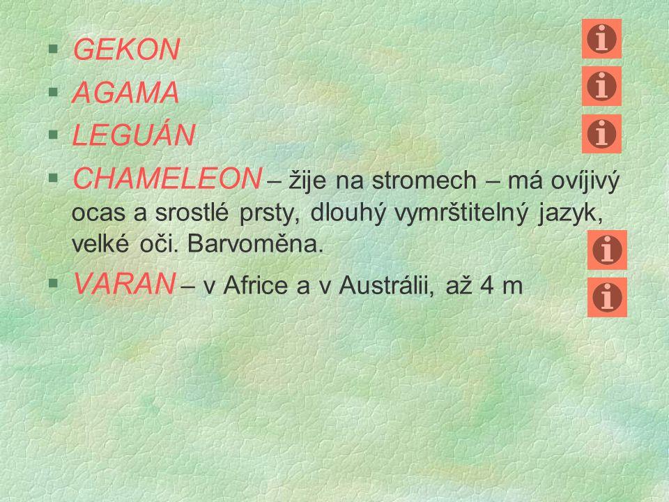 §G§GEKON §A§AGAMA §L§LEGUÁN CCHAMELEON – žije na stromech – má ovíjivý ocas a srostlé prsty, dlouhý vymrštitelný jazyk, velké oči.