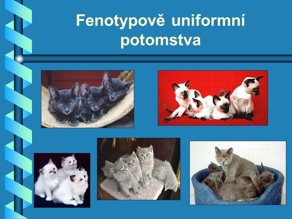 Fenotypově uniformní potomstva