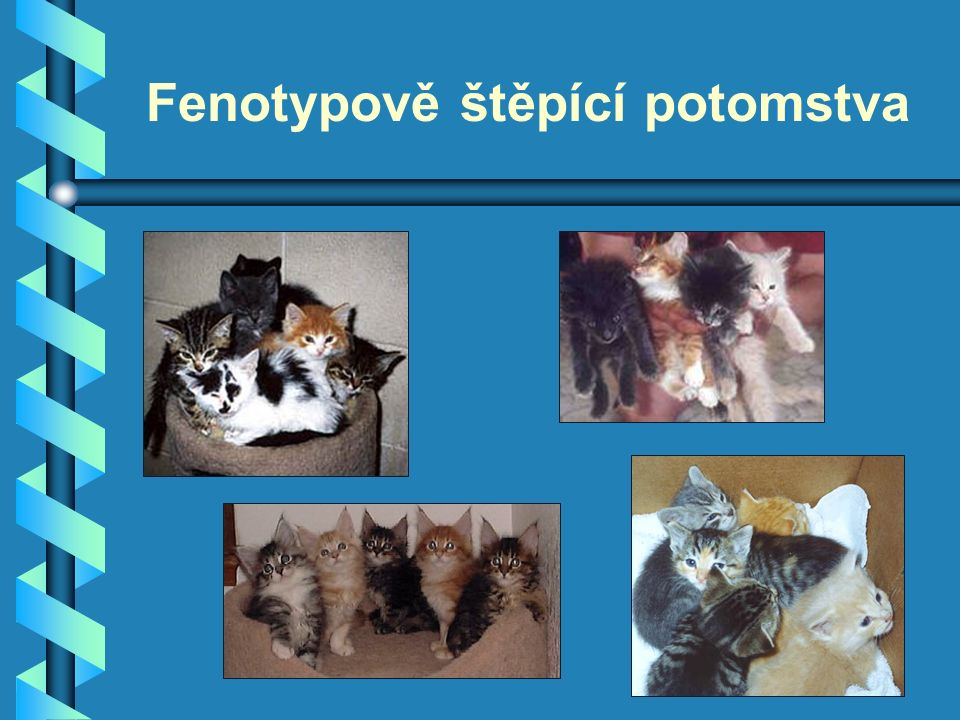 Fenotypově štěpící potomstva