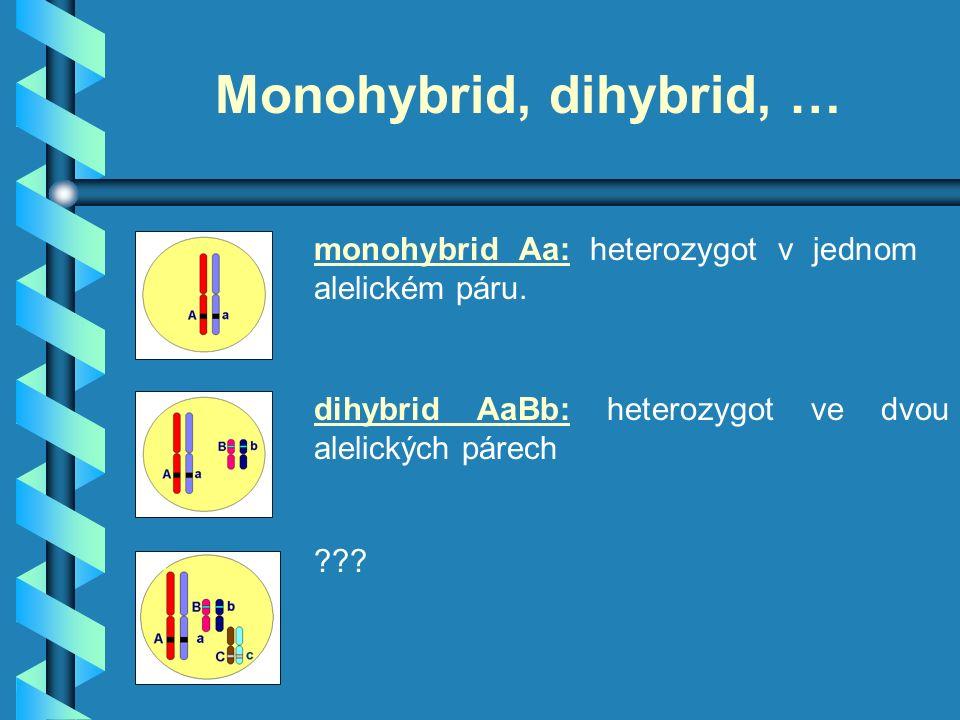 Monohybrid, dihybrid, … monohybrid Aa: heterozygot v jednom alelickém páru.