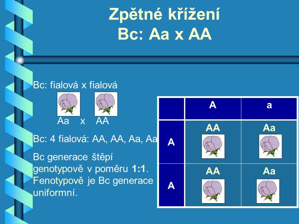 Bc: fialová x fialová Aa x AA Bc: 4 fialová: AA, AA, Aa, Aa Bc generace štěpí genotypově v poměru 1:1.